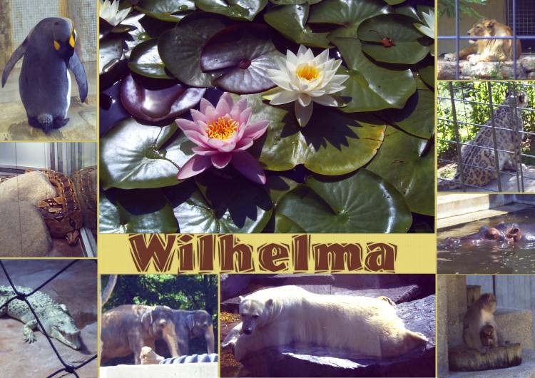 wilhelma-kl1c2