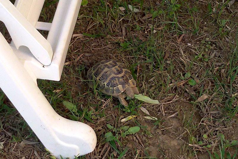Auch die Schildkröten dürfen mitessen