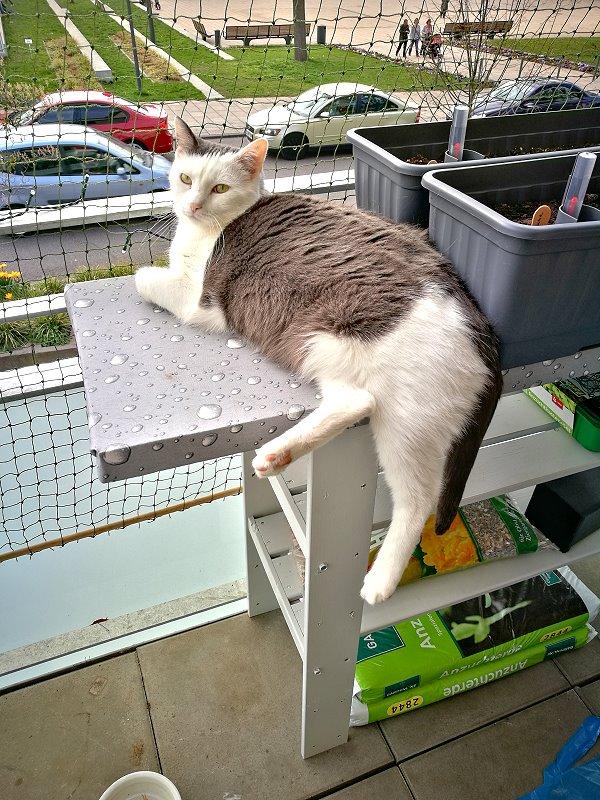 {Creadienstag} Regaltisch auf dem Balkon