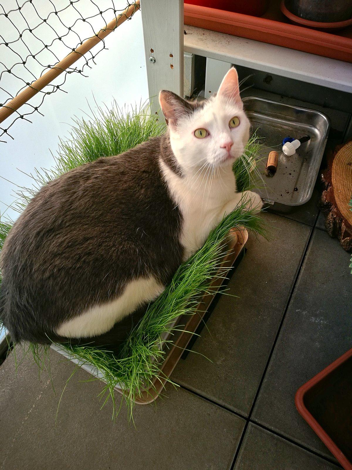 Katzenpflanzen auf dem Balkon