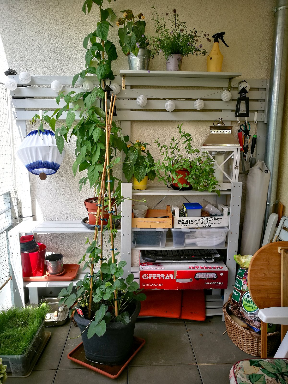 {Creadienstag} Katzen-, Pflanzen-, Stauraum-Regal auf dem Balkon